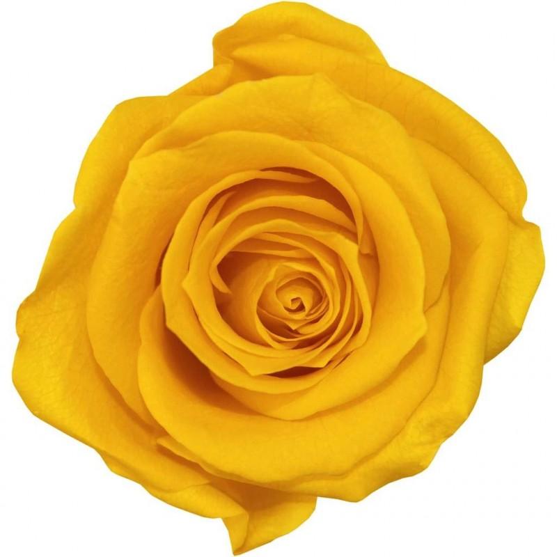 Rose stabilisée Standard Boite de 6 têtes Jaune