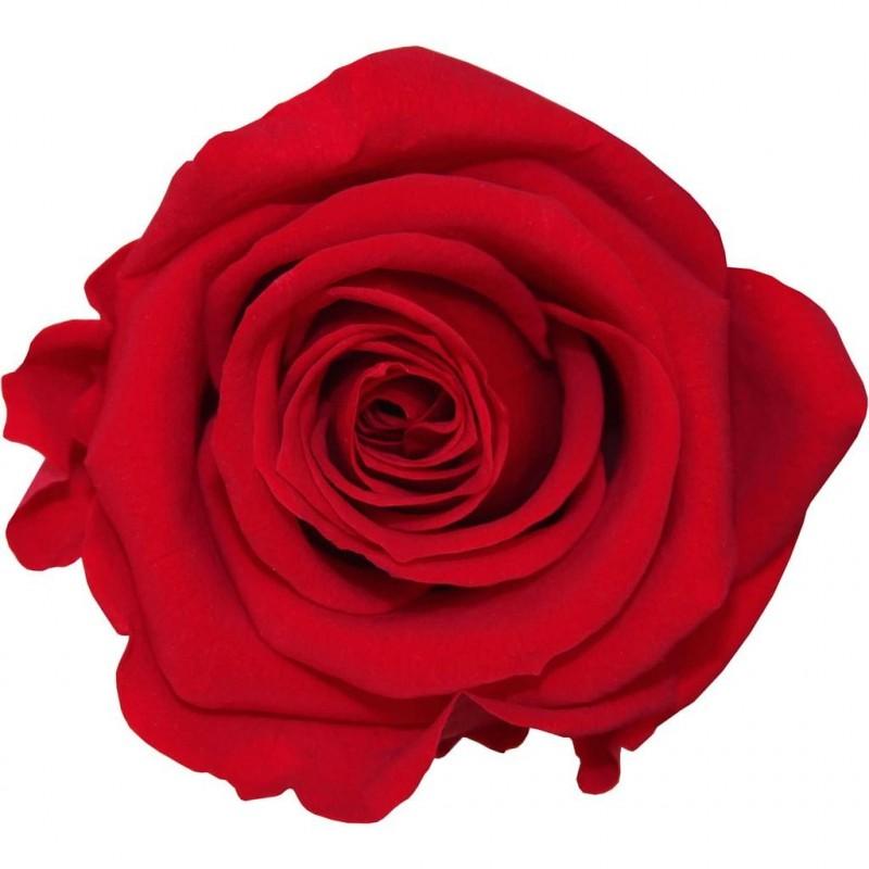 Rose stabilisée Standard Boite de 6 têtes Rouge