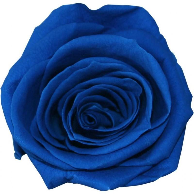 Rose stabilisée Standard Boite de 6 têtes Bleu foncé