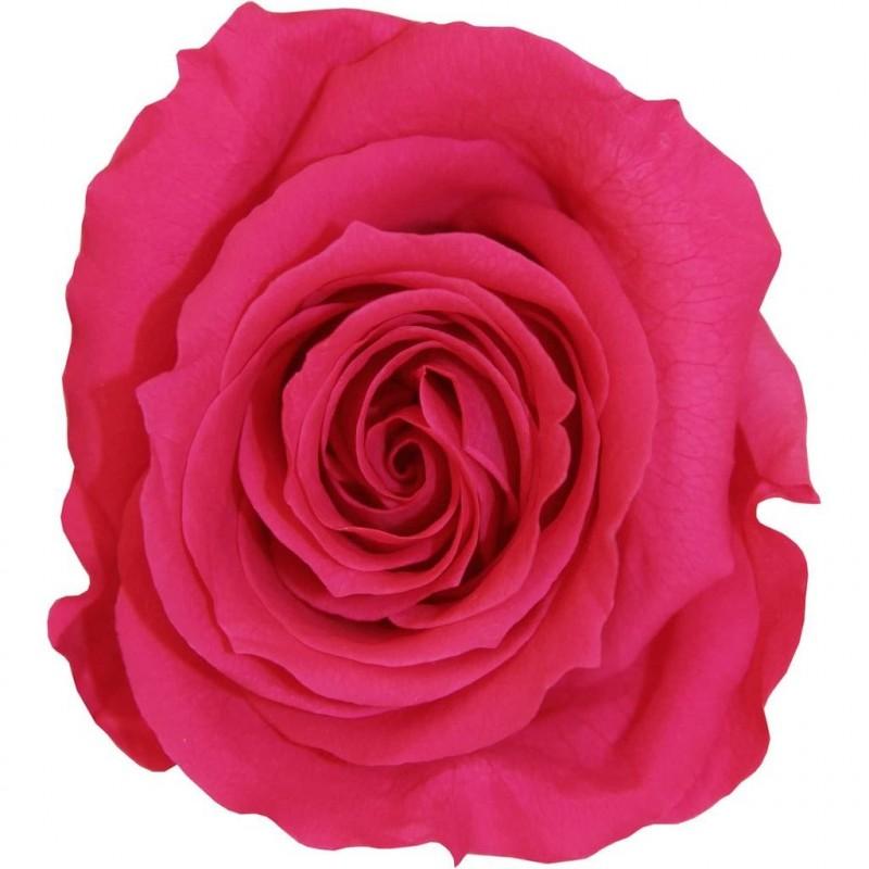Rose stabilisée Standard Boite de 6 têtes Rose foncé
