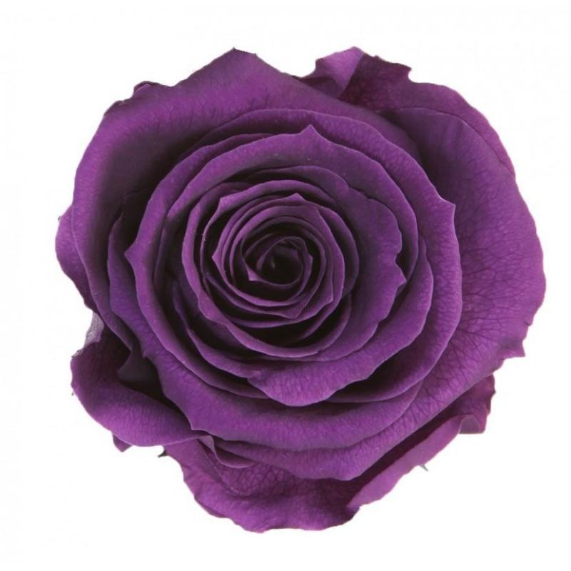Rose stabilisée Extra Boite de 6 têtes Violet