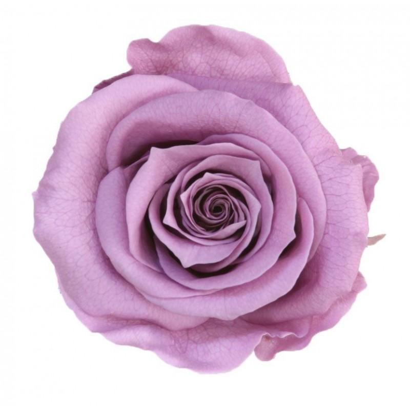 Rose stabilisée Standard Boite de 6 têtes Lilas