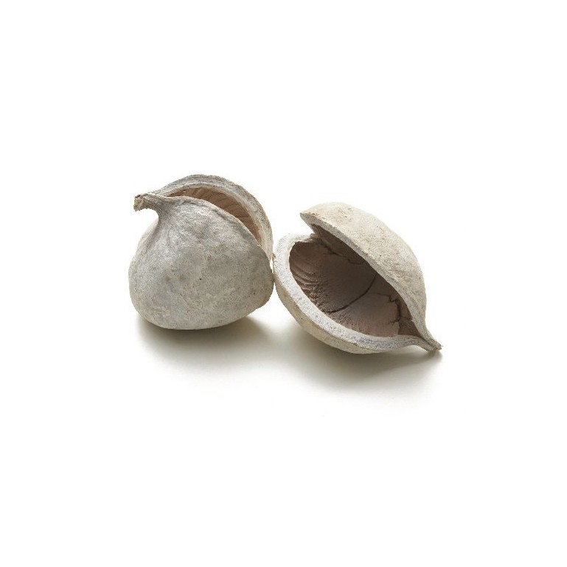 BUDDHA NUTS_BLANCHI_x6 pièces_GZ0165-01