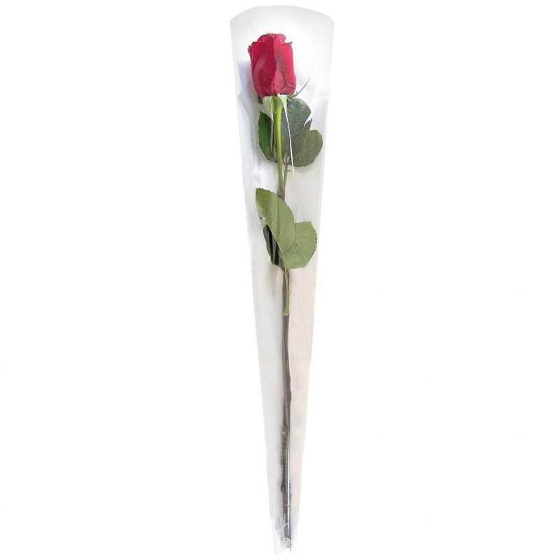 ETUI POUR ROSE_CONE 1 ROSE NEUTRE 55x13,5X3cm_W0055165