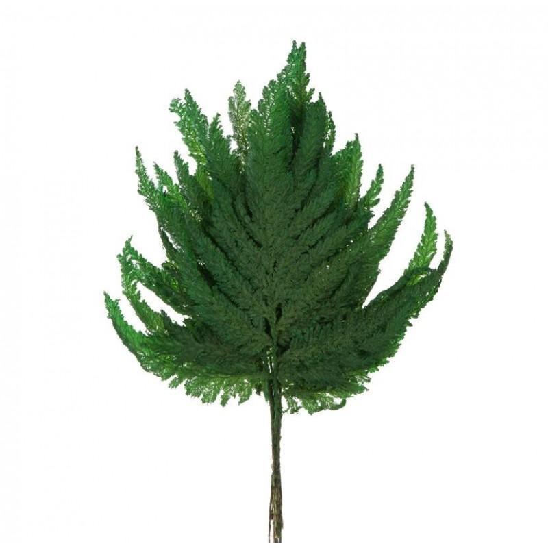 Fougère stabilisée 6 feuilles Vert
