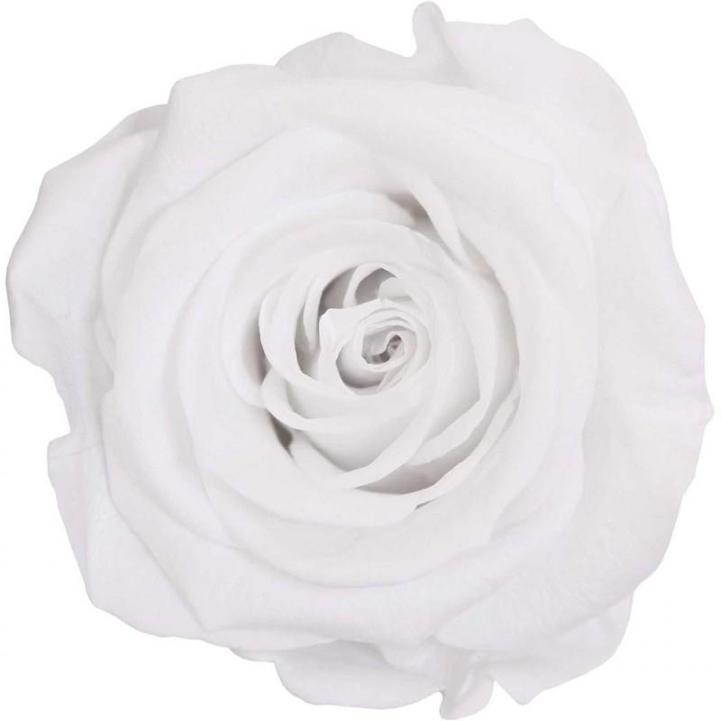 Rose stabilisée Mini Boite de 12 têtes Blanc