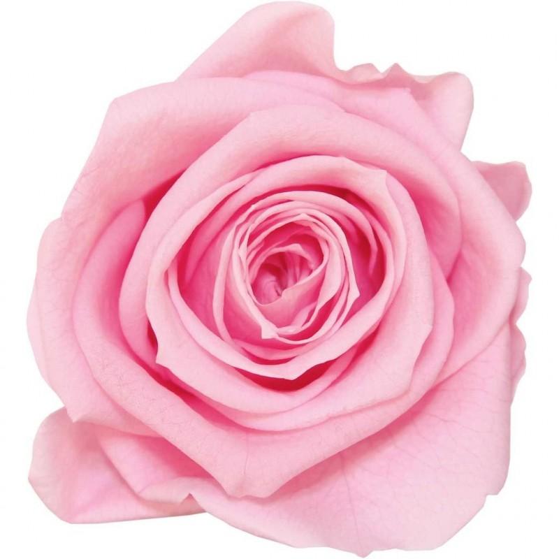 Rose stabilisée Mini Boite de 12 têtes Rose pastel