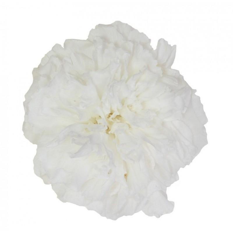 Oeillet stabilisé Boite de 6 têtes Blanc