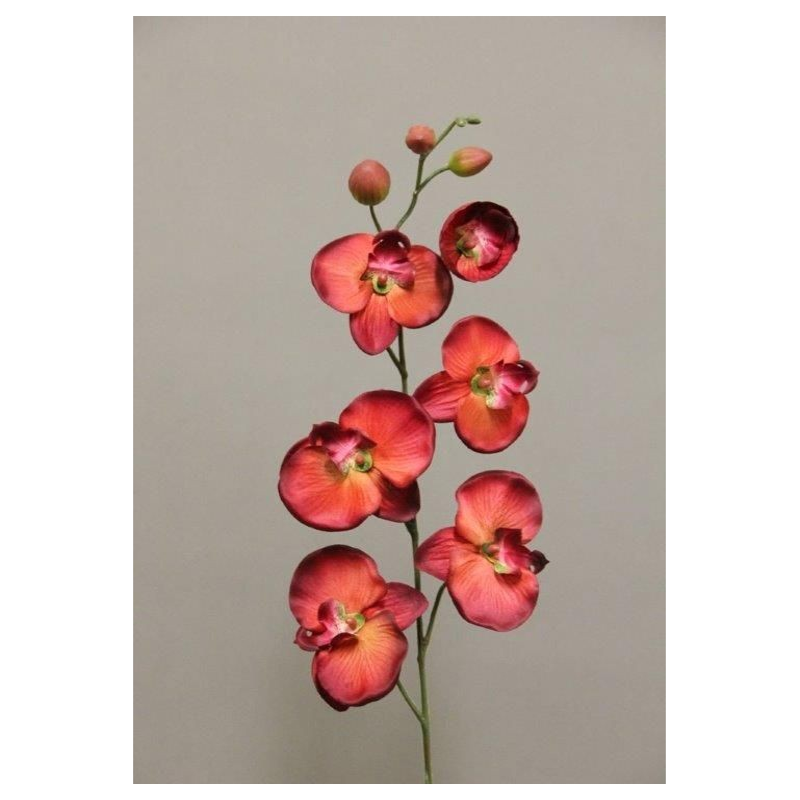 Phanelopsis rouge 85cm