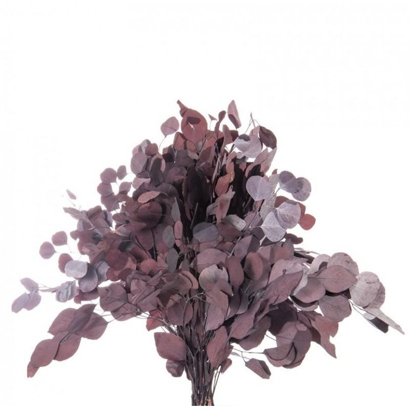 Populus stabilisé 40-80cm Rouge