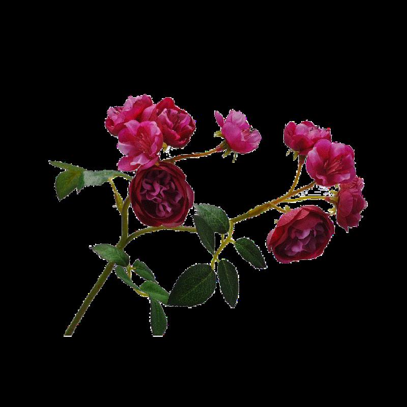 ROSE PICK _BEAUTY_30cm_108959