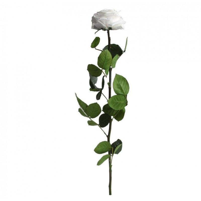 Rose stabilisée sur tige Premium Blanc