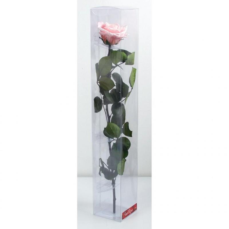 Rose stabilisée sur tige Premium Rose pastel
