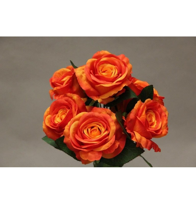 ROSE x7_ORANGE_YM016_O