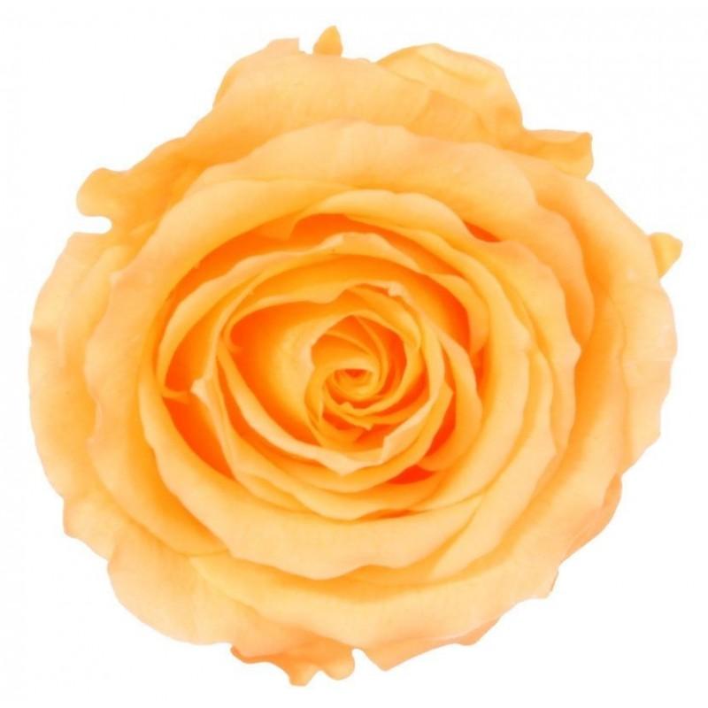 Rose stabilisée XXS Boite de 16 têtes  Pêche