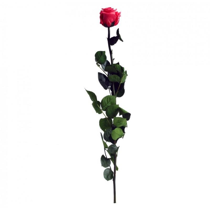 Rose stabilisée sur tige Standard Rose foncé