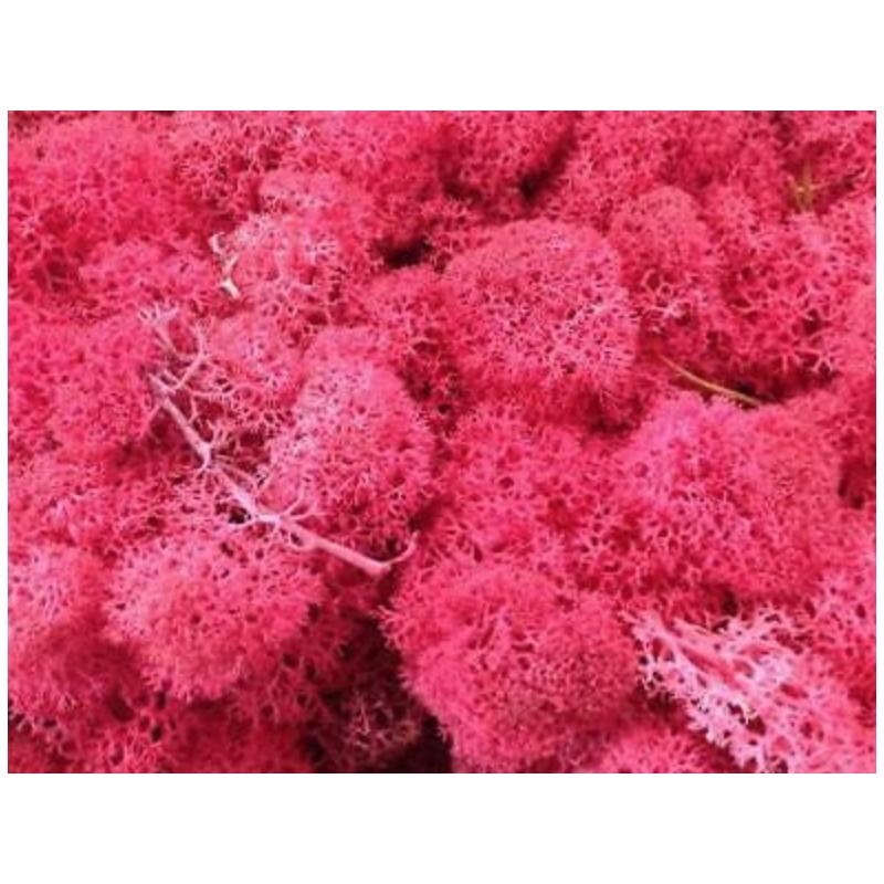 Lichen stabilisé Boite de 500g Rose