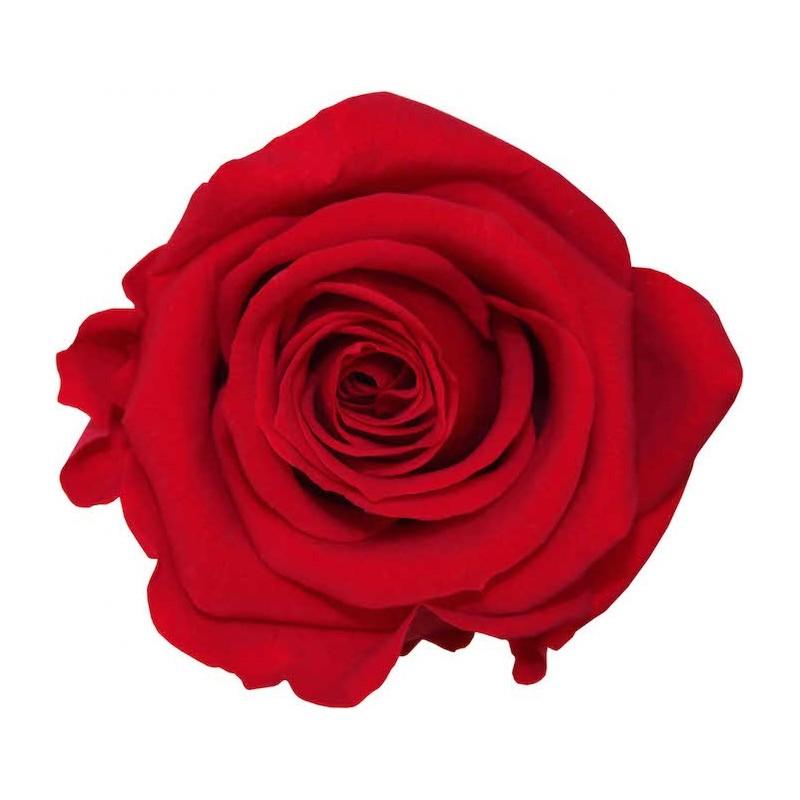 Rose stabilisée Mini Boite de 12 têtes Rouge