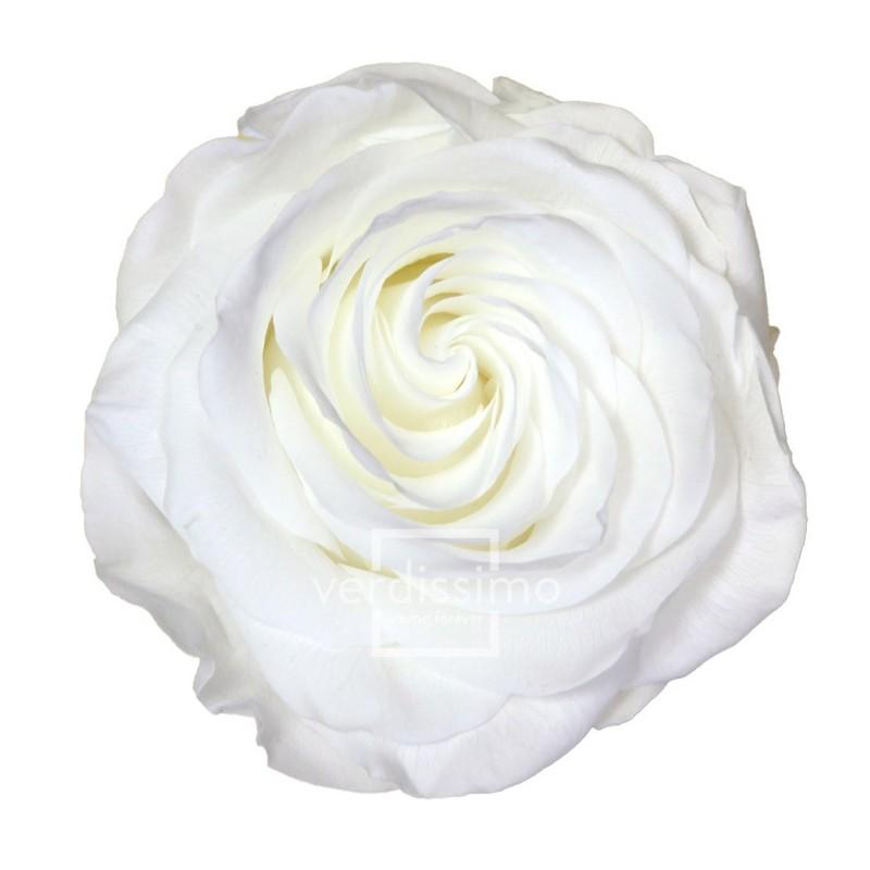 Rose stabilisée Premium Boite de 4 têtes Blanc
