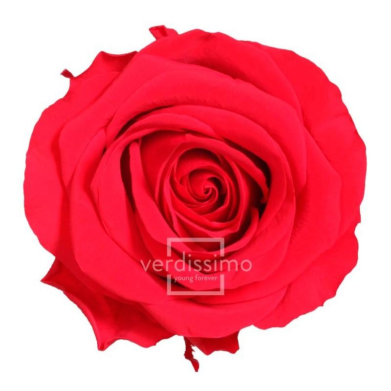 Rose stabilisée Premium Boite de 4 têtes Rouge