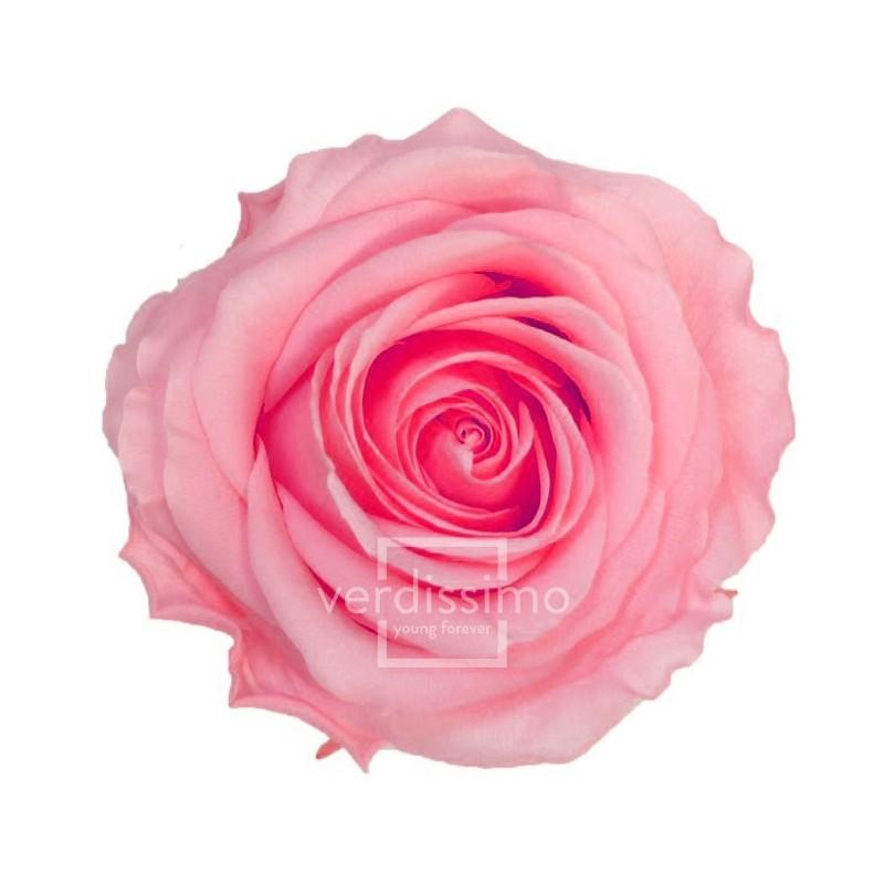Rose stabilisée Premium Boite de 4 têtes Rose Pastel