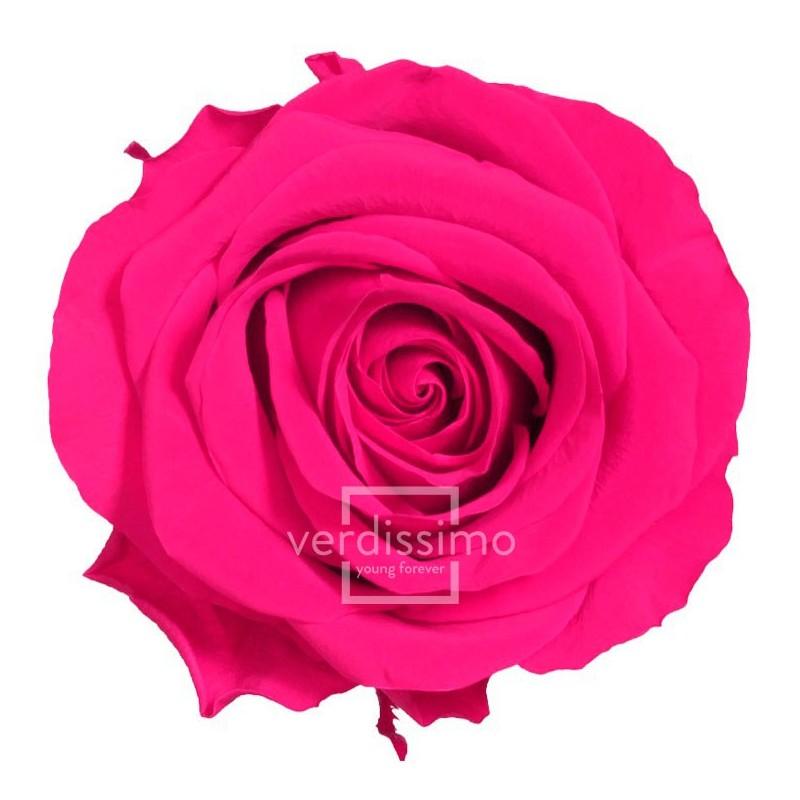 Rose stabilisée Premium Boite de 4 tête Rose foncé