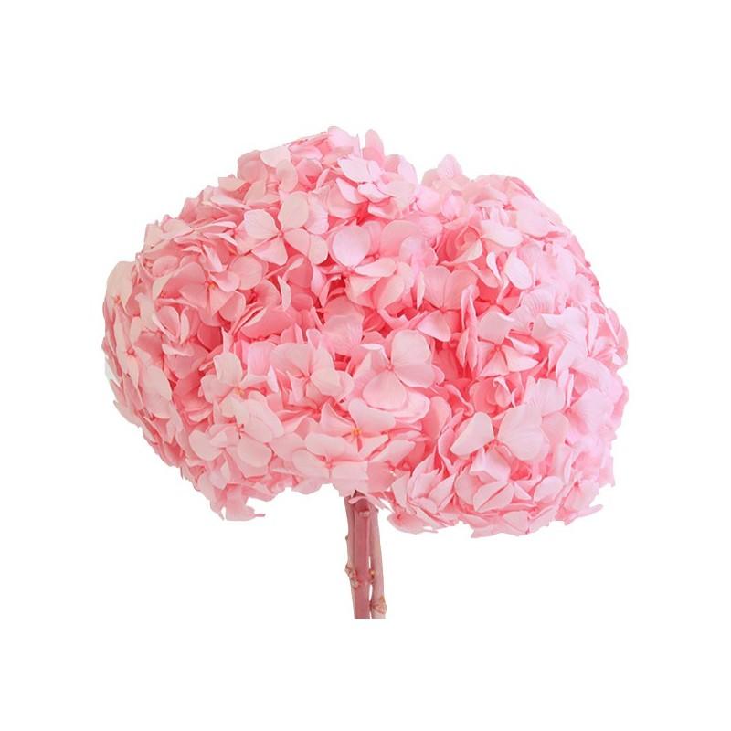 Hortensia stabilisé Premium Rose pastel
