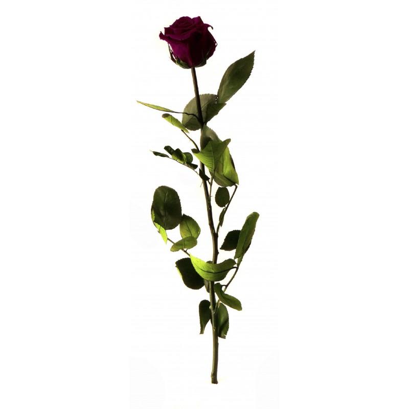 Rose stabilisée sur tige Standard Rouge intense