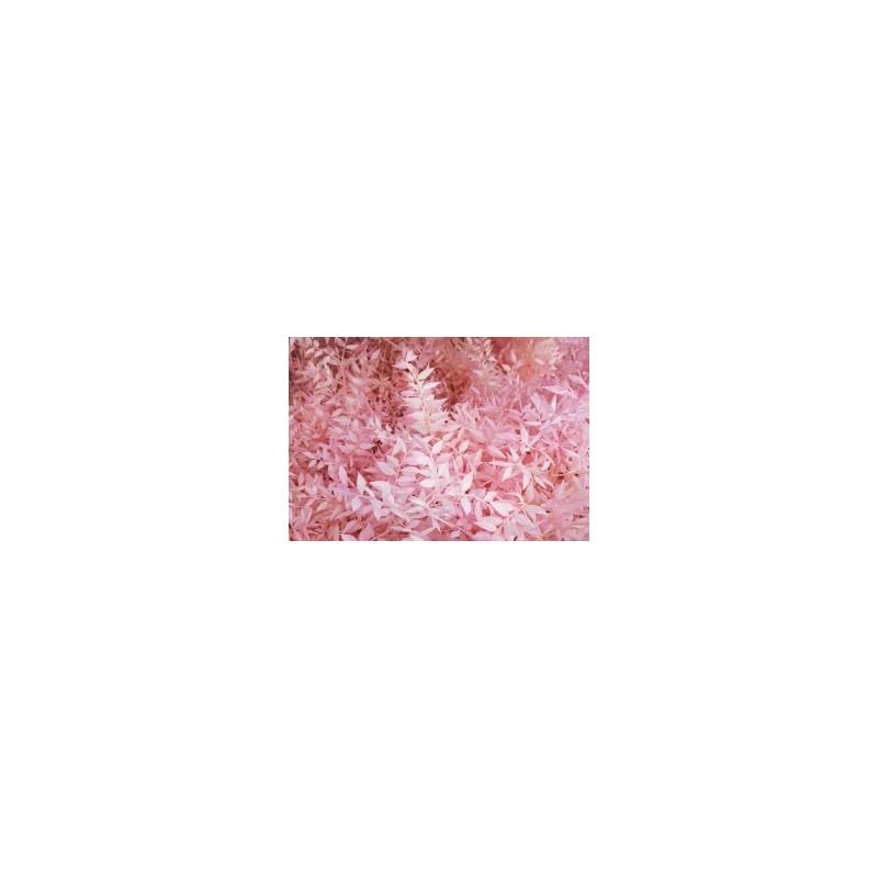 Fleurs séchées de Ruscus Rose Pastel
