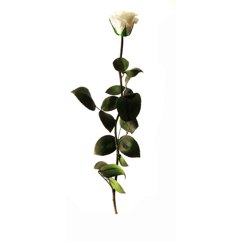 Rose stabilisée sur tige Standard Blanc