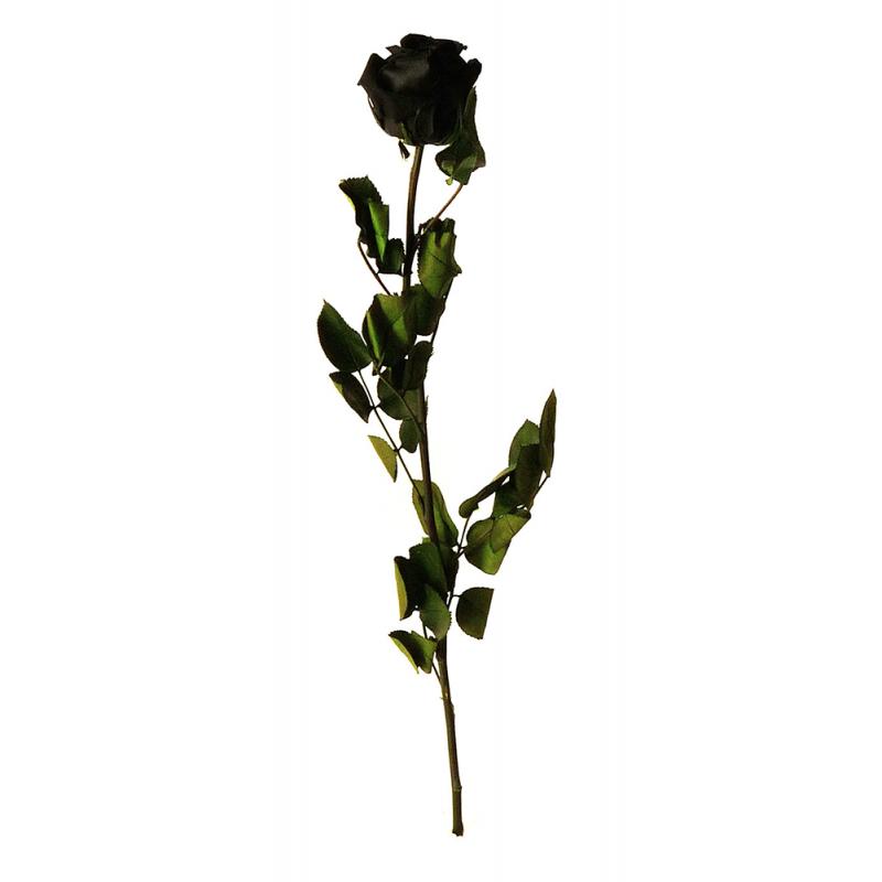 Rose stabilisée sur tige Standard Noir