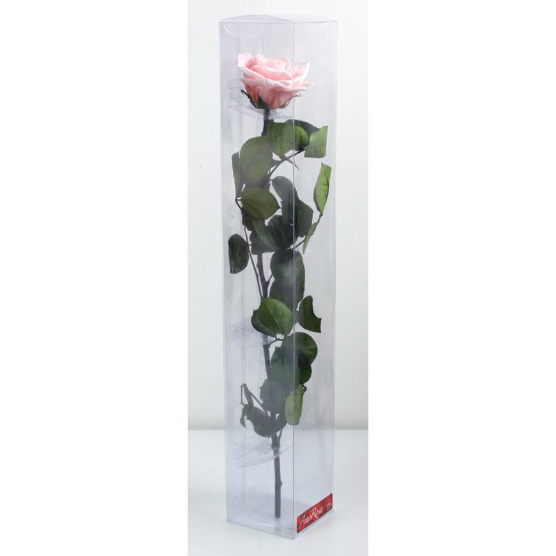 Rose stabilisée sur tige Standard Rose pastel