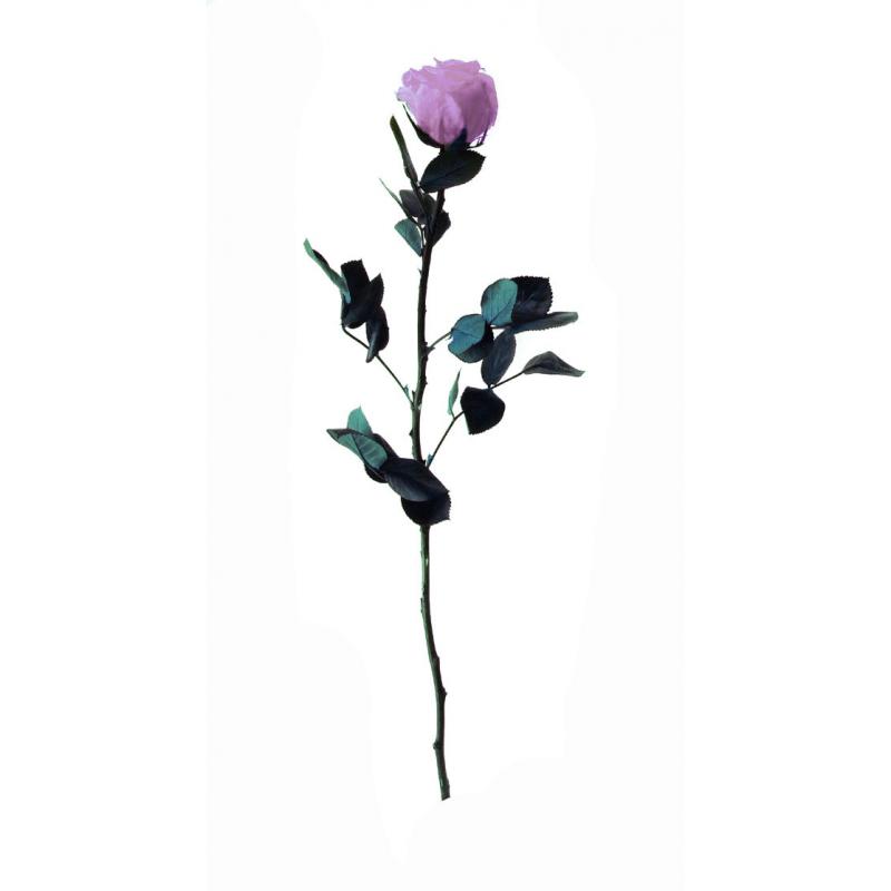 Rose stabilisée sur tige Standard Lilas