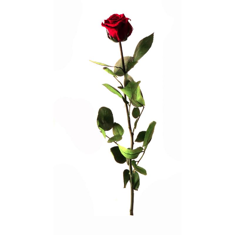 Rose stabilisée sur tige Standard Rouge