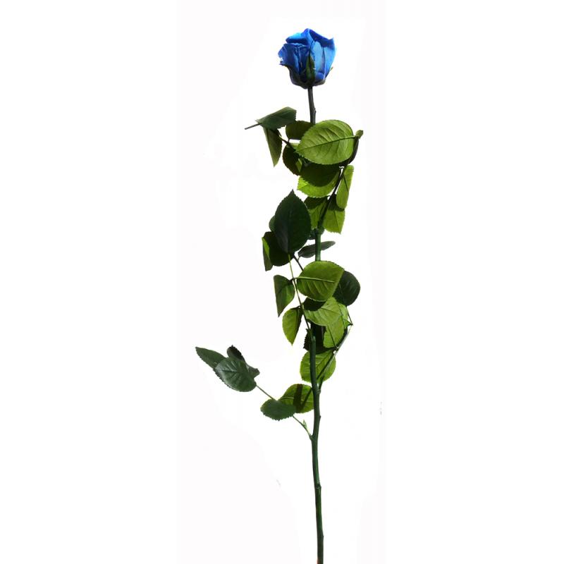 Rose stabilisée sur tige Standard Bleu foncé