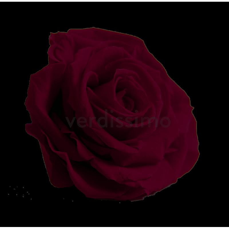 Rose stabilisée Premium Boite de 4 têtes Rouge intense