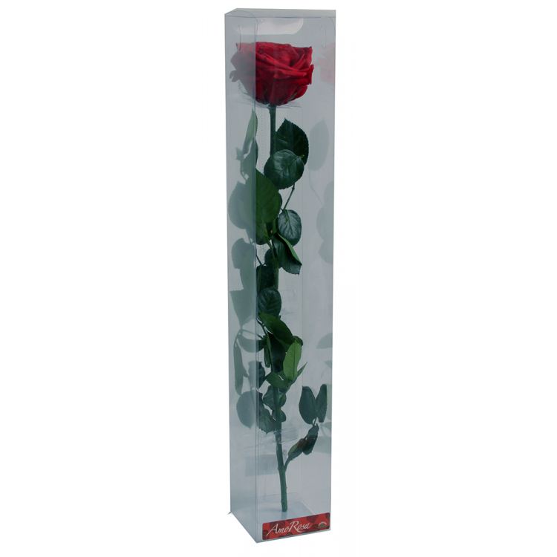 Rose stabilisée sur tige Premium Rouge foncé dans boite
