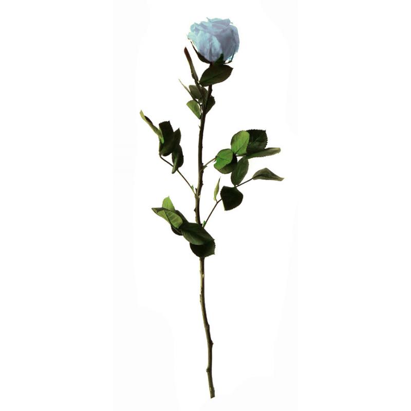 Rose stabilisée sur tige Standard Bleu pastel