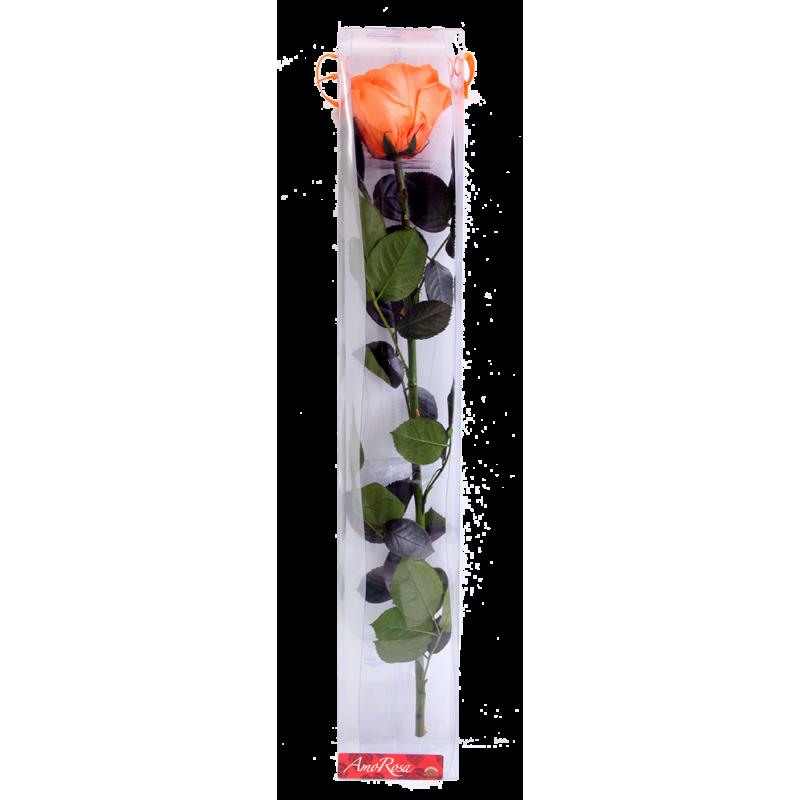 Rose stabilisée sur tige Standard Orange