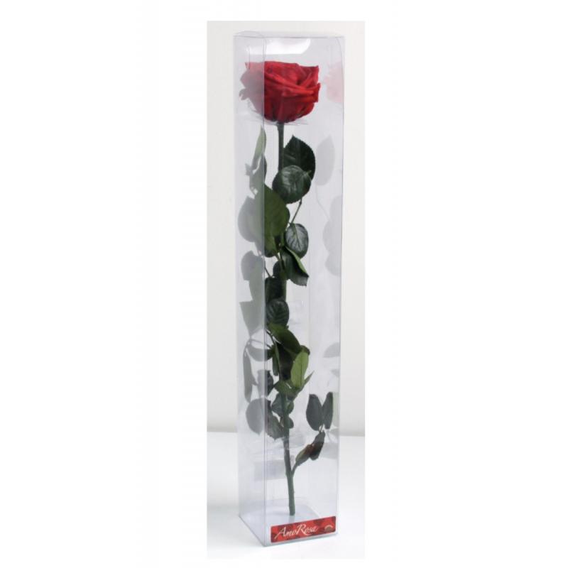 Rose stabilisée sur tige Premium Rouge dans boite