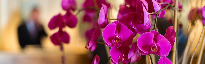 Grossiste en fleurs artificielles : Artiflor