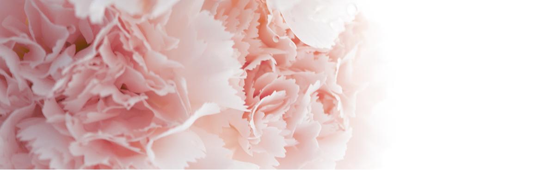 Fleurs stabilisées : Grossiste Artiflor