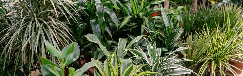 grossiste plantes artificielles