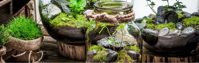grossiste en terrarium