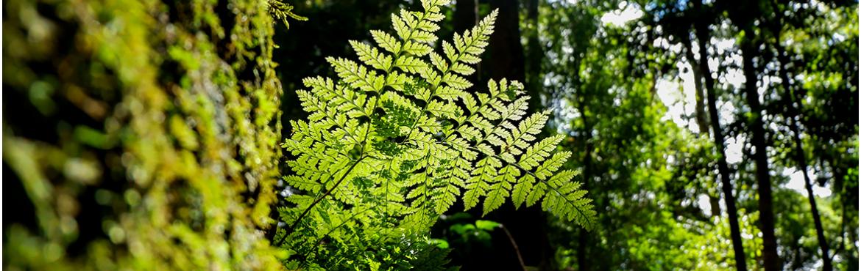 Plantes stabilisées : Grossiste Artiflor